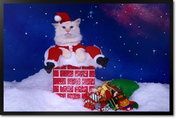 Holiday Santa Cat