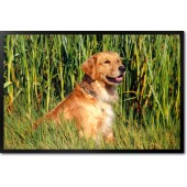 Golden Retriever Dog in Reeds
