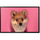 Pomeranian Pretty in Pink