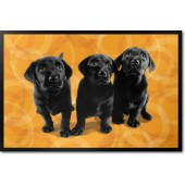 Labrador Puppies, Black