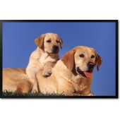 Labradors on Grass, Yellow
