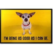 Chihuahua - Good s I Can Be